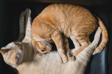 Sleeping Cat Hugging On Chair