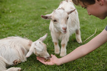 Child Has Fun Feeding And Petting Animals At The Petting Zoo