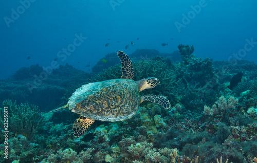 Foto op Aluminium Schildpad Swimming green turtle