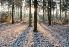 Sunrise In A Winter Woodland. ...