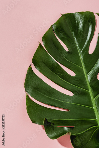 Photo Monstera