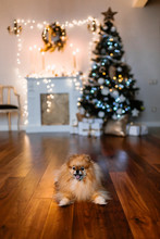 Christmas Tree And A Small Dog Sitting In Front Of It