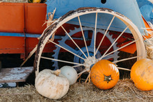 Pumpkins In Front Of Tractor