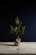 Christmas Tree On Dark Background With Plenty Copyspace.