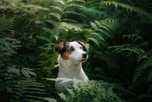 The Dog In The Woods. Jack Rus...