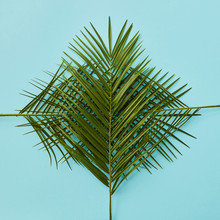 Pattern Of Palm Leaves On Blue Background