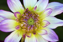 Color Outdoor Floral Macro You...