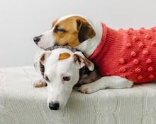 Cute Dogs In Sweaters