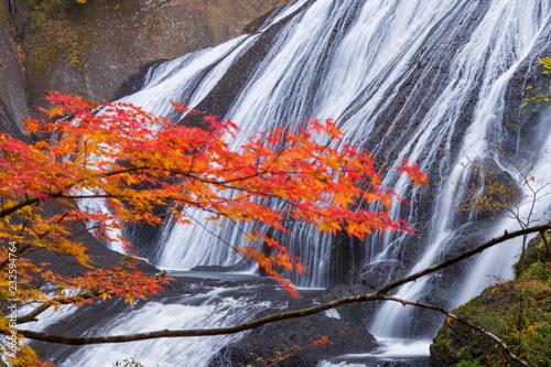 Obraz 茨城県 袋田の滝の紅葉 - fototapety do salonu
