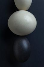 Ostrich And Emu Eggs