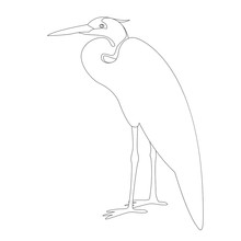 Heron Is Standing Vector Illustration  Lining Draw