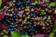 Lots Of Juicy Ripe Rural Grape...