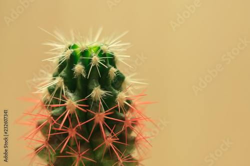 Fotobehang Cactus green cactus with white and red needles on beige background