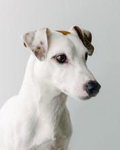 Adorable White Dog