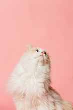 Pink Background Portrait Of A ...