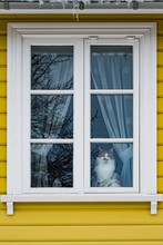 Cat Sits In A Window In Iceland