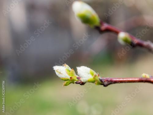Staande foto Lente trees bloom in spring
