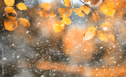 Spoed Fotobehang Meloen Autumn park in the first snow