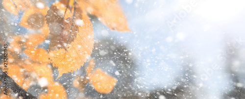Spoed Fotobehang Meloen Background autumn park in the first snow