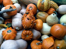 Pumpkins Of Different Shapes, Sizes And Colors