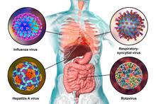 Human Pathogenic Viruses Causi...