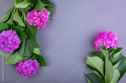 Fresh purple hydrangeas on gray background. Free space for text. Top view. Copy space. Blank greeting card for creative work design