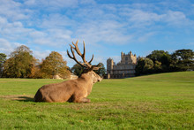 Deer At Wollaton Hall