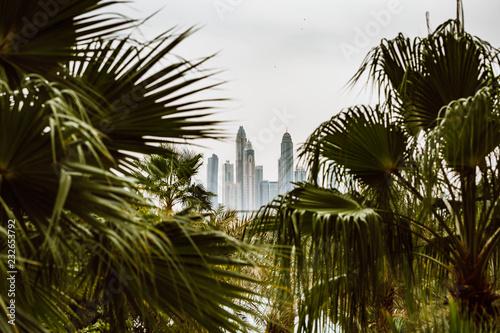 Photo  Beautiful skyline of Dubai framed with palm trees.
