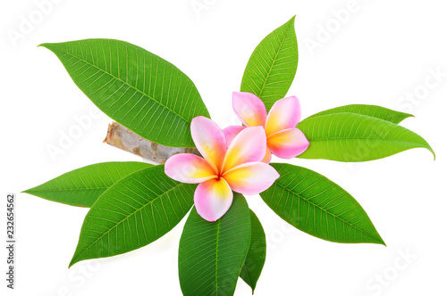 Tuinposter Frangipani Frangipani (plumeria) isolated on white background