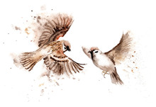 Watercolor Drawings Of Birds. ...
