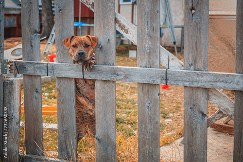 Photographie Junk yard Dog