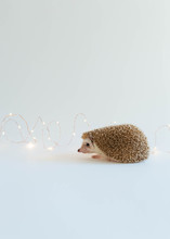 Tiny Cute Hedgehog Surrounded By Fairy Lights