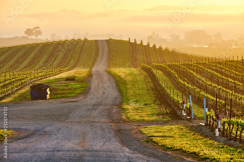 Staande foto Verenigde Staten Vineyards at sunrise in California, USA