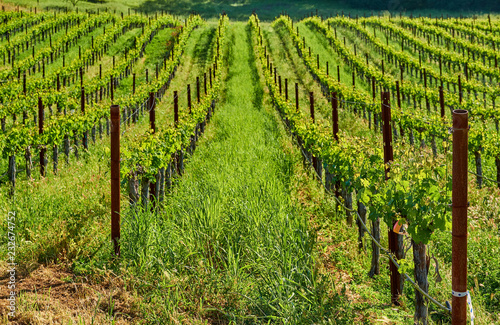 Staande foto Verenigde Staten Vineyards in California, USA