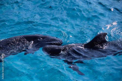 Dolphin of good friend - 仲良しのイルカ