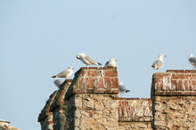 Real Seagulls In Meeting