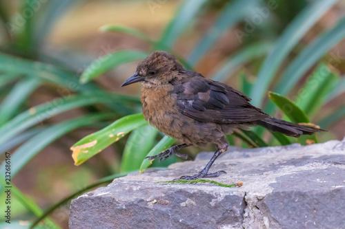 Staande foto Vogel bird