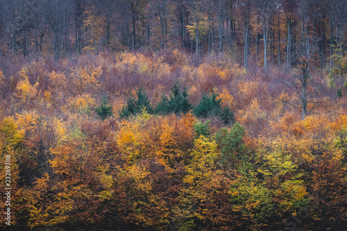 Photo Stands Roe herbstlicher Mischwald