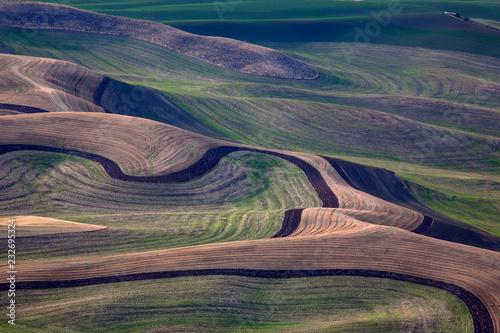 Staande foto Cappuccino Green grassland