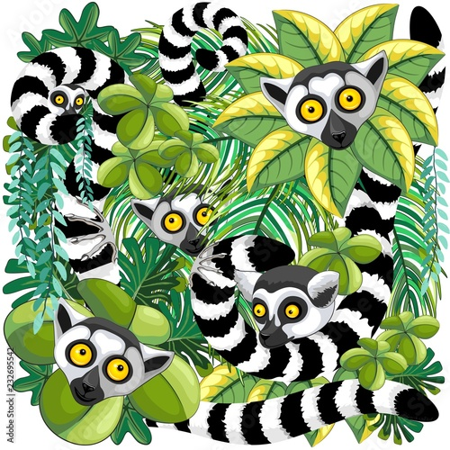 Spoed Foto op Canvas Draw Lemurs on Madagascar Rainforest