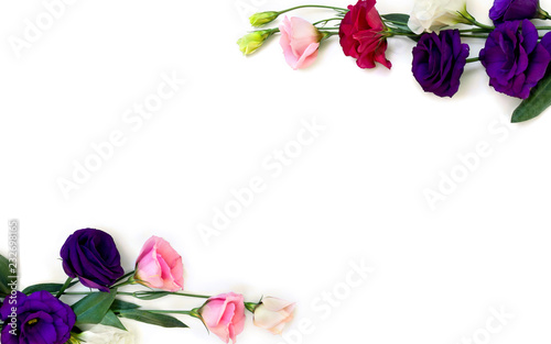 Frame Of Violet White Pink And Red Flowers Eustoma Common Names