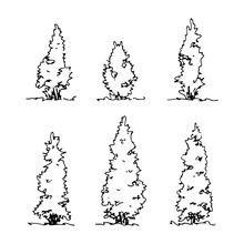 Set Of Hand Drawn Sketch Thuja. Architect Tree. Isolated Shrubbery On Transparent Backdrop