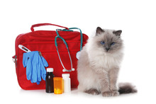 First Aid Kit And Cute Cat On White Background. Animal Care