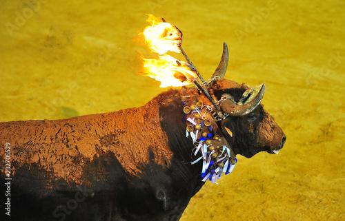 Photo bull in spain