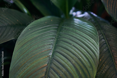 Exotic plant leaves background texture, close-up. Beautiful