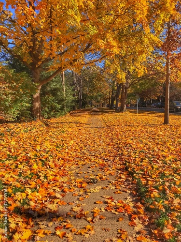 Aluminium Prints Autumn Fall leaves and colors on early morning walk. Autumn background. Fallen autumn leaves on sidewalk. Yellow, orange, red autumn leaves. Autumn colorful leaves in morning.