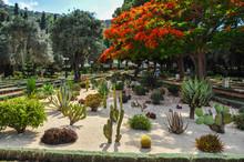 Cactus Garden Near The Bahai World Centre In Haifa (Israel)