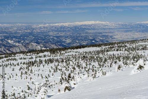 Fotografie, Obraz  雪原のオオシラビソと朝日連峰