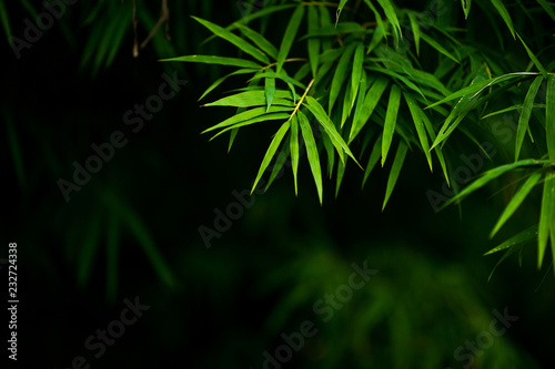 Foto op Plexiglas Bamboe Bamboo forest green background Nature & Shade
