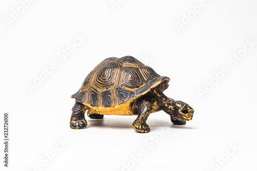 Foto op Aluminium Schildpad turtle on white background